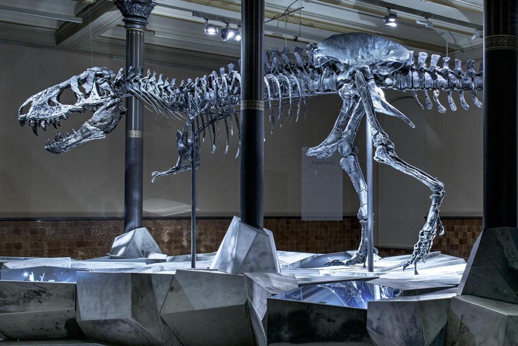 טריסטן אוטו (דינוזאור T רקס במוזיאון הטבע הברלינאי). קרדיט: קארולה רדקה עבור מוזיאון הטבע (באישור)